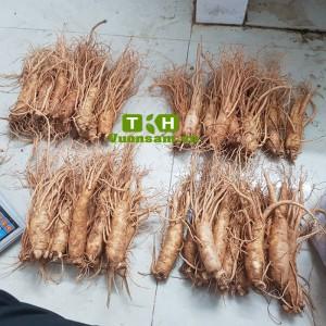 Nhân Sâm Tươi Hàn Quốc Từ 10 Đến 12 Củ/kg