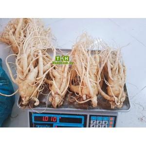 Nhân Sâm Tươi Hàn Quốc 4 Củ/kg