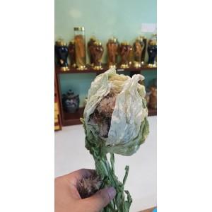 Hoa Tuyết Liên Sơn Khô 300g - 500g